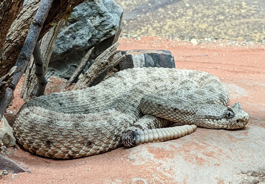 Arizona-Sonora Desert Museum - zoo  | Photo 10 of 10 | Address: 2021 N Kinney Rd, Tucson, AZ 85743, USA | Phone: (520) 883-1380