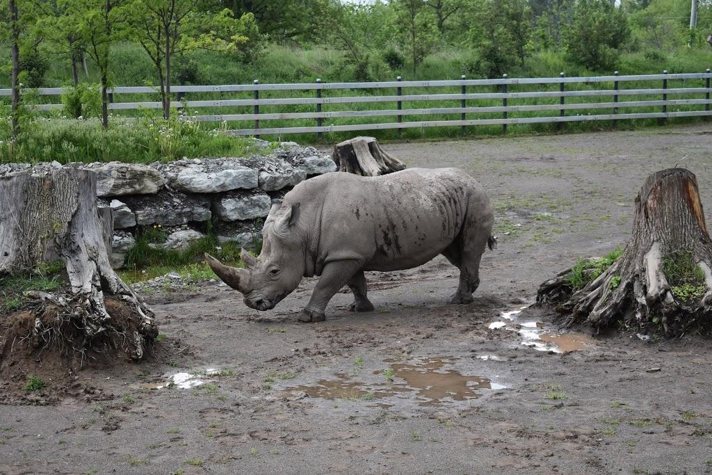 Safari Niagara - zoo    Photo 10 of 10   Address: 2821 Stevensville Rd, Stevensville, ON L0S 1S0, Canada   Phone: (905) 382-9669