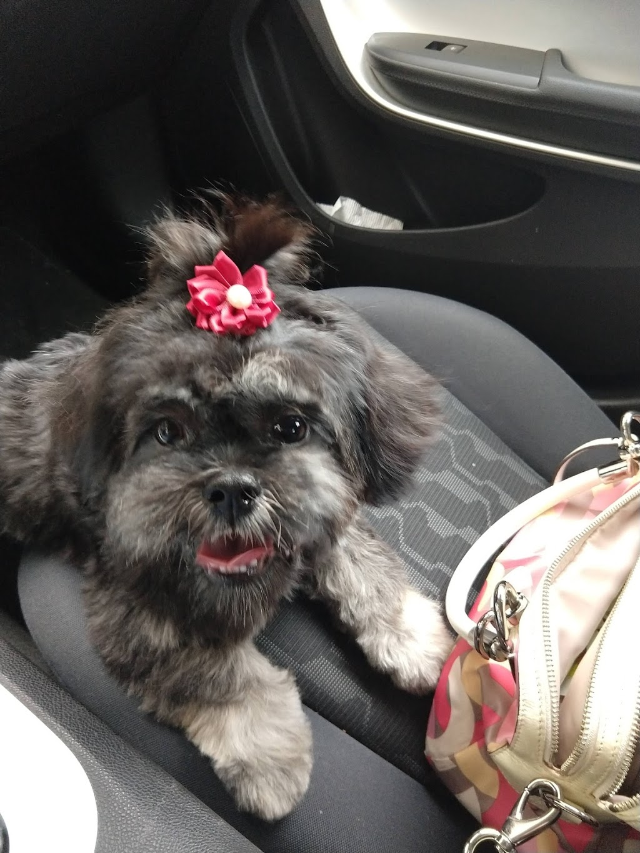 Zen Pet Spa - pet store  | Photo 6 of 10 | Address: 15420 SW 136th St UNIT 60, Miami, FL 33196, USA | Phone: (786) 581-9233