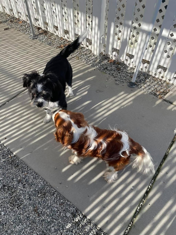 Loving Pet Inn & Resort -     Photo 4 of 10   Address: 820 Gallimore Dairy Rd, High Point, NC 27265, USA   Phone: (336) 393-0670