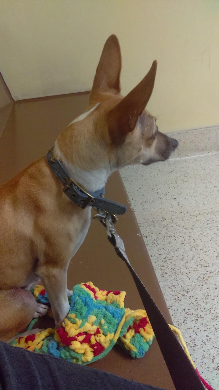Golden State Humane Society - veterinary care  | Photo 10 of 10 | Address: 555 E Artesia Blvd, Long Beach, CA 90805, USA | Phone: (562) 423-8406