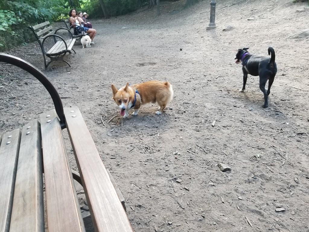 St. Nicholas Park Dog Run - park  | Photo 2 of 10 | Address: Unnamed Road, New York, NY 10032, USA | Phone: (212) 639-9675