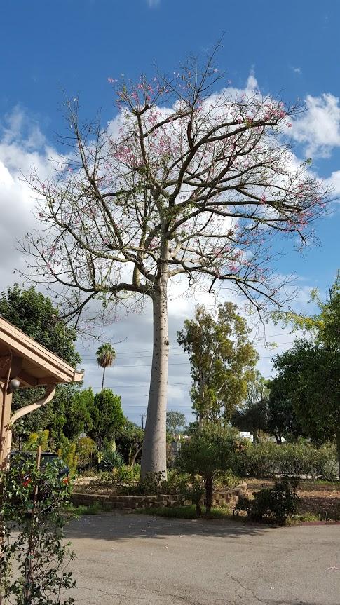 The Divine Art of Yoga Center Ashram - gym    Photo 4 of 10   Address: 851 W Whittier Blvd, La Habra, CA 90631, USA   Phone: (562) 245-6469