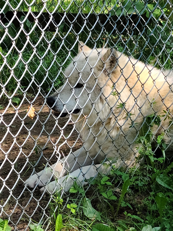 Black Pine Animal Sanctuary - park    Photo 3 of 10   Address: 1426 W 300 N, Albion, IN 46701, USA   Phone: (260) 636-7383