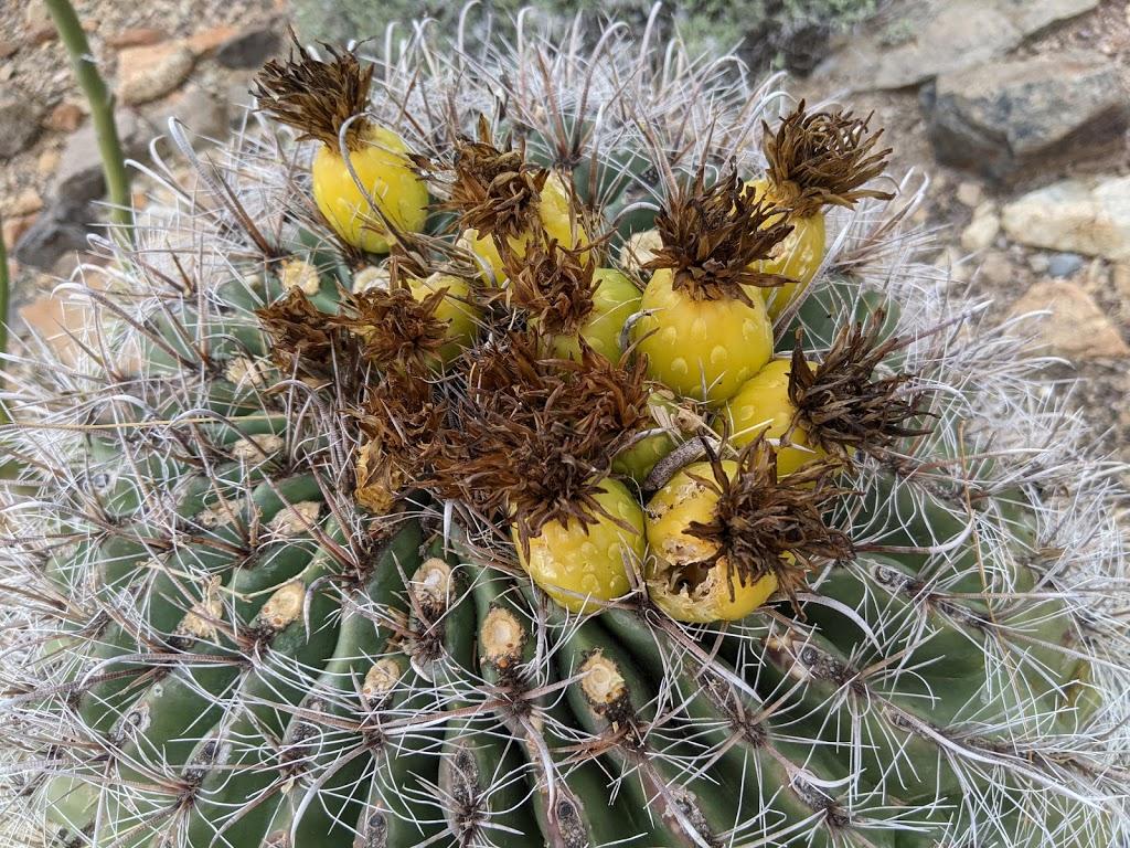 Arizona-Sonora Desert Museum - zoo  | Photo 5 of 10 | Address: 2021 N Kinney Rd, Tucson, AZ 85743, USA | Phone: (520) 883-1380