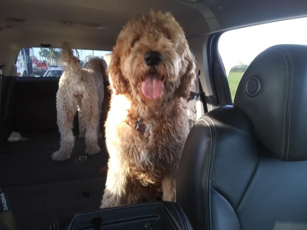 Zen Pet Spa - pet store  | Photo 9 of 10 | Address: 15420 SW 136th St UNIT 60, Miami, FL 33196, USA | Phone: (786) 581-9233
