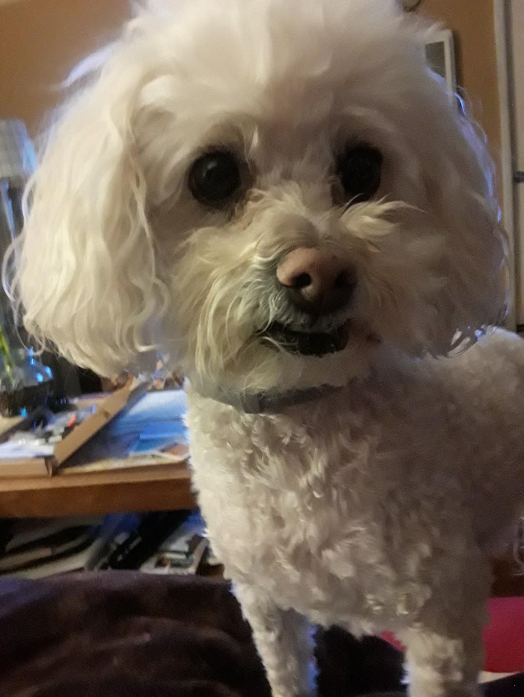 Alta Vista Veterinary Clinic - veterinary care  | Photo 4 of 10 | Address: 27641 Mission Blvd, Hayward, CA 94544, USA | Phone: (510) 537-3562