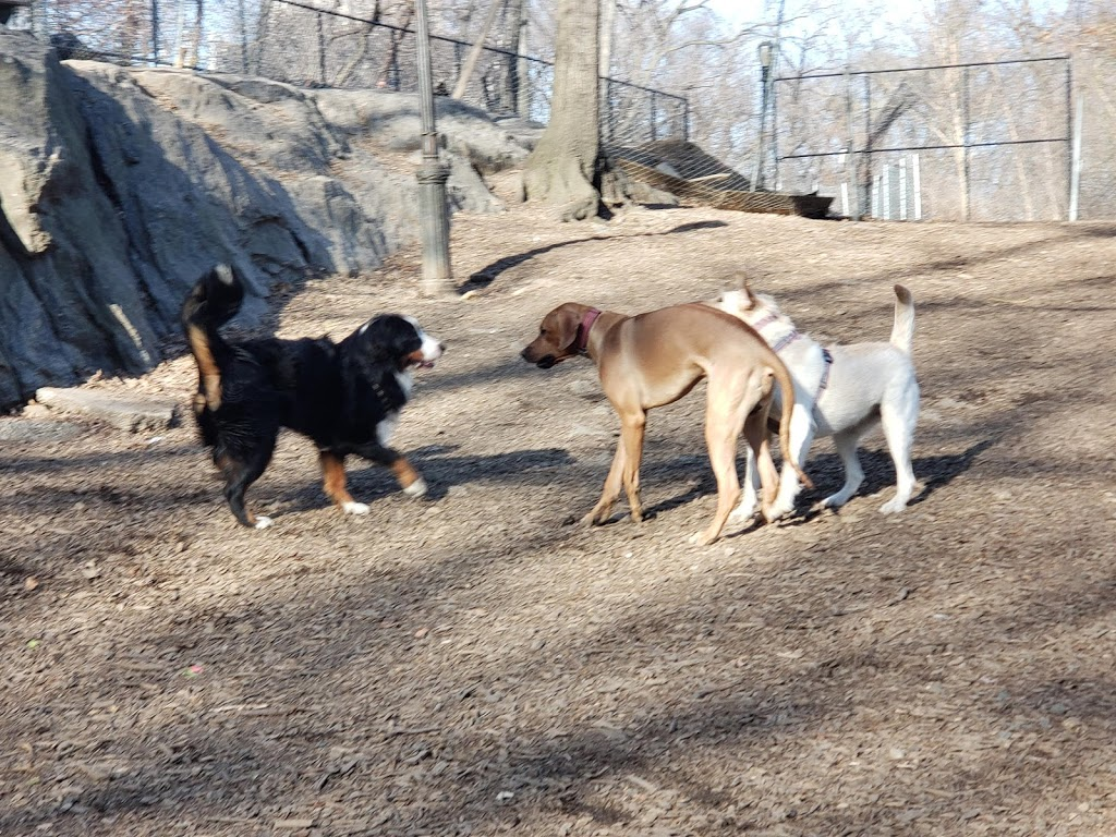 St. Nicholas Park Dog Run - park  | Photo 4 of 10 | Address: Unnamed Road, New York, NY 10032, USA | Phone: (212) 639-9675