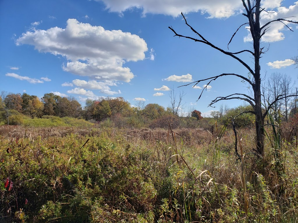Liberty Park - park  | Photo 7 of 10 | Address: 9999 Liberty Rd, Twinsburg, OH 44087, USA | Phone: (330) 487-0493
