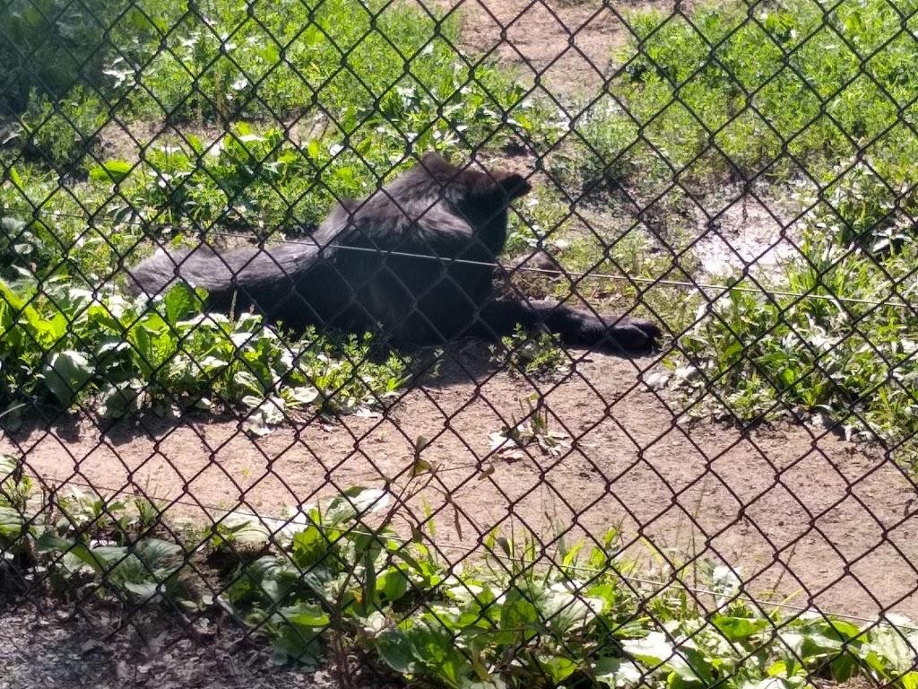 Safari Niagara - zoo    Photo 9 of 10   Address: 2821 Stevensville Rd, Stevensville, ON L0S 1S0, Canada   Phone: (905) 382-9669