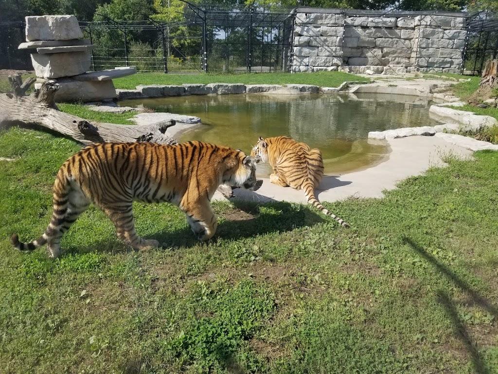 Safari Niagara - zoo    Photo 7 of 10   Address: 2821 Stevensville Rd, Stevensville, ON L0S 1S0, Canada   Phone: (905) 382-9669