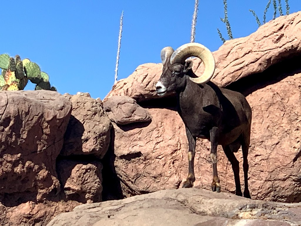 Arizona-Sonora Desert Museum - zoo  | Photo 3 of 10 | Address: 2021 N Kinney Rd, Tucson, AZ 85743, USA | Phone: (520) 883-1380
