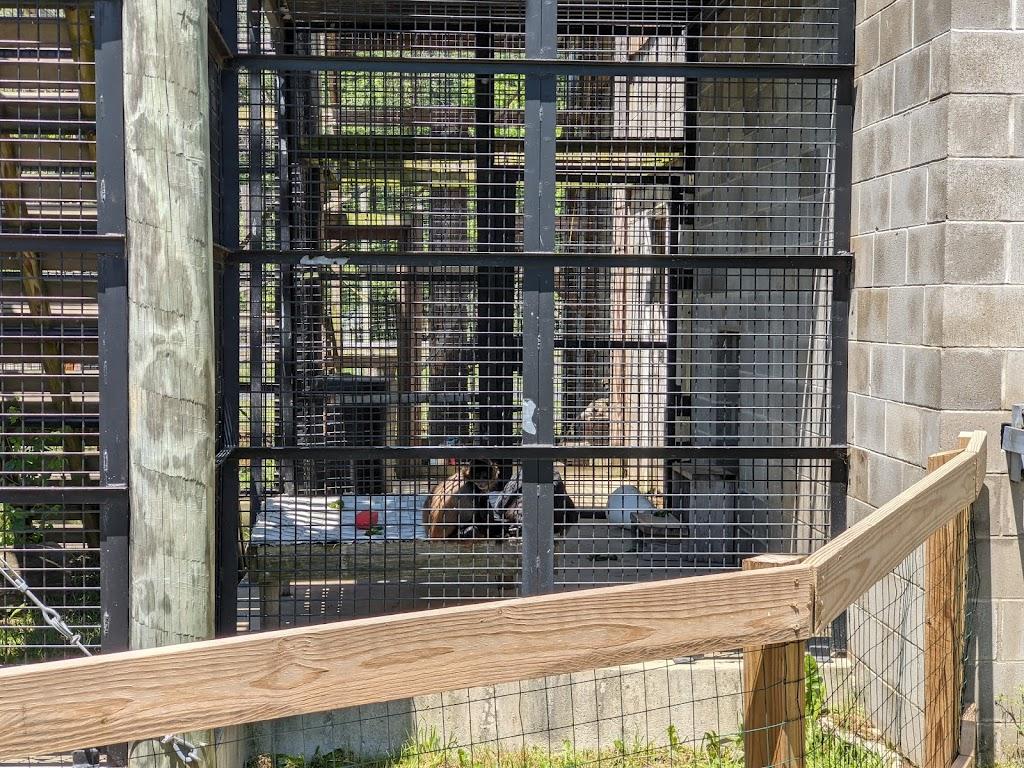 Black Pine Animal Sanctuary - park    Photo 7 of 10   Address: 1426 W 300 N, Albion, IN 46701, USA   Phone: (260) 636-7383