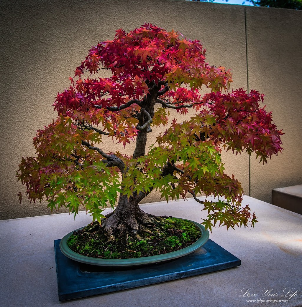 Pacific Bonsai Museum - museum    Photo 8 of 10   Address: 2515 S 336th St, Federal Way, WA 98003, USA   Phone: (253) 353-7345