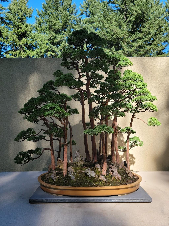 Pacific Bonsai Museum - museum    Photo 5 of 10   Address: 2515 S 336th St, Federal Way, WA 98003, USA   Phone: (253) 353-7345