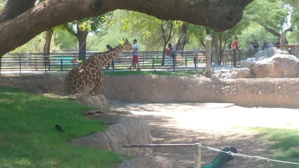 Reid Park Zoological Society - zoo    Photo 1 of 10   Address: 1030 S Randolph Way, Tucson, AZ 85716, USA   Phone: (520) 791-3204