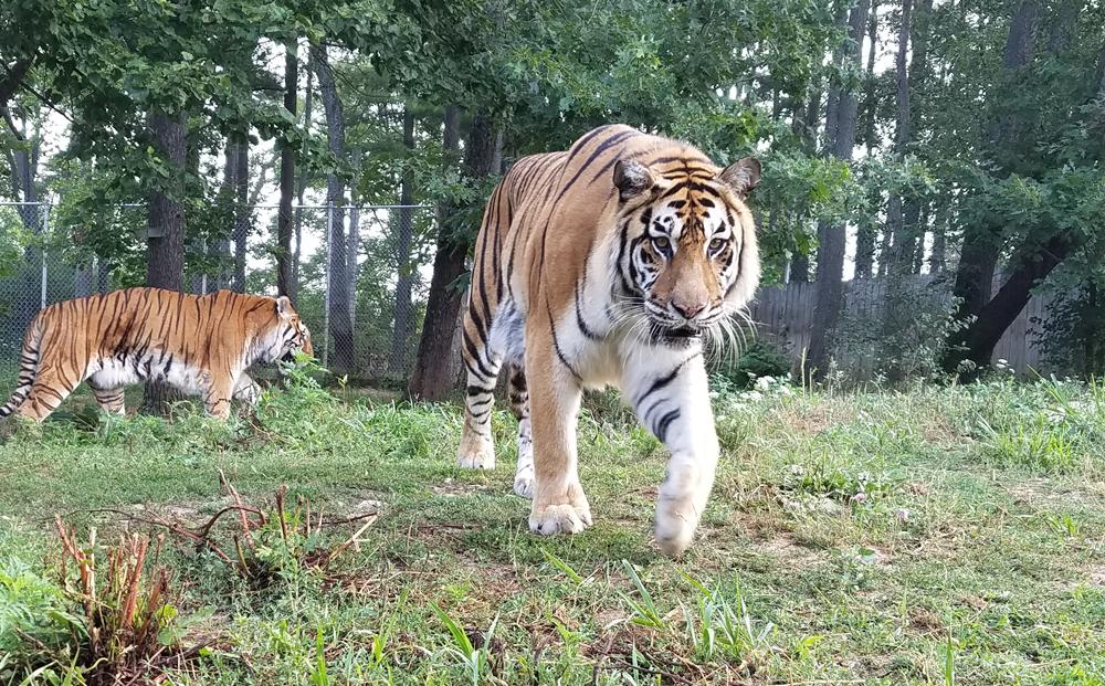 Black Pine Animal Sanctuary - park    Photo 1 of 10   Address: 1426 W 300 N, Albion, IN 46701, USA   Phone: (260) 636-7383