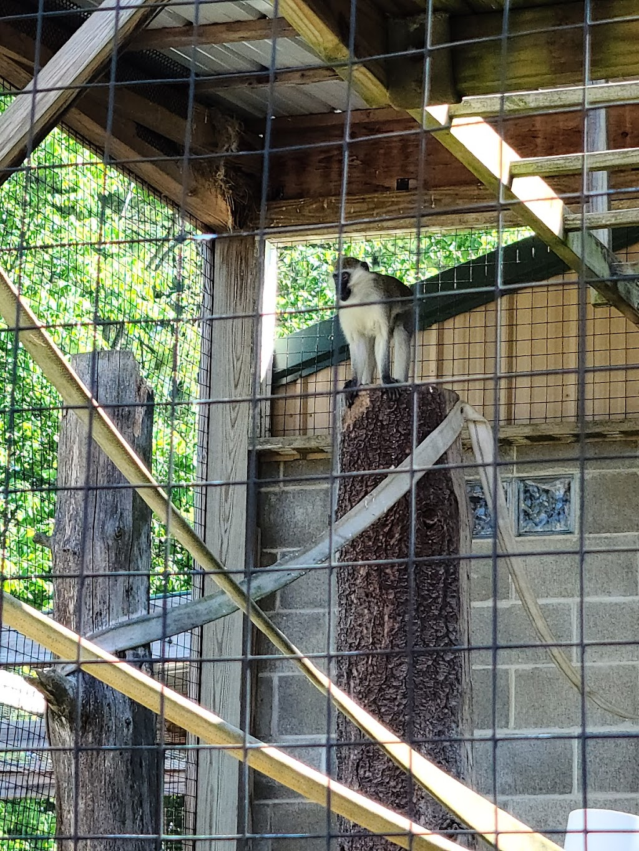 Black Pine Animal Sanctuary - park    Photo 9 of 10   Address: 1426 W 300 N, Albion, IN 46701, USA   Phone: (260) 636-7383