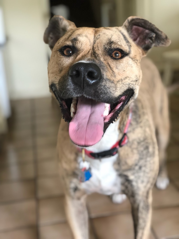 Animal Medical Center of Mission Viejo - veterinary care  | Photo 7 of 10 | Address: 27230 La Paz Rd A, Mission Viejo, CA 92692, USA | Phone: (949) 768-3300