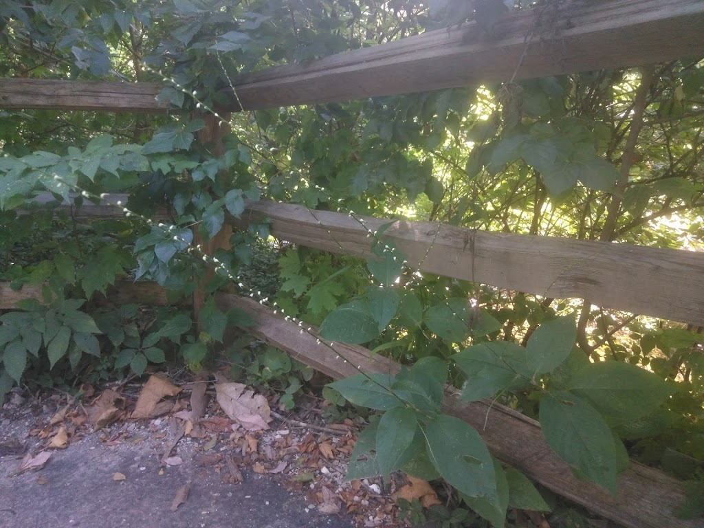 Larson Park - park  | Photo 8 of 10 | Address: 520 W Kirkham Ave, Webster Groves, MO 63119, USA | Phone: (314) 963-5300