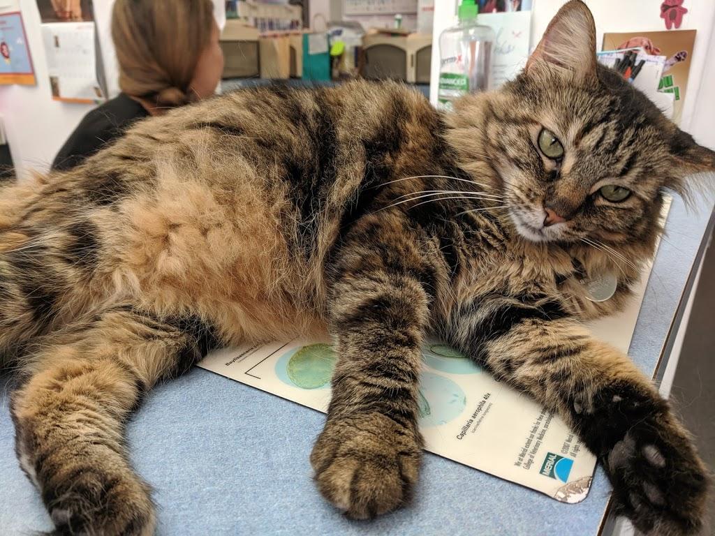 Alta Vista Veterinary Clinic - veterinary care  | Photo 10 of 10 | Address: 27641 Mission Blvd, Hayward, CA 94544, USA | Phone: (510) 537-3562