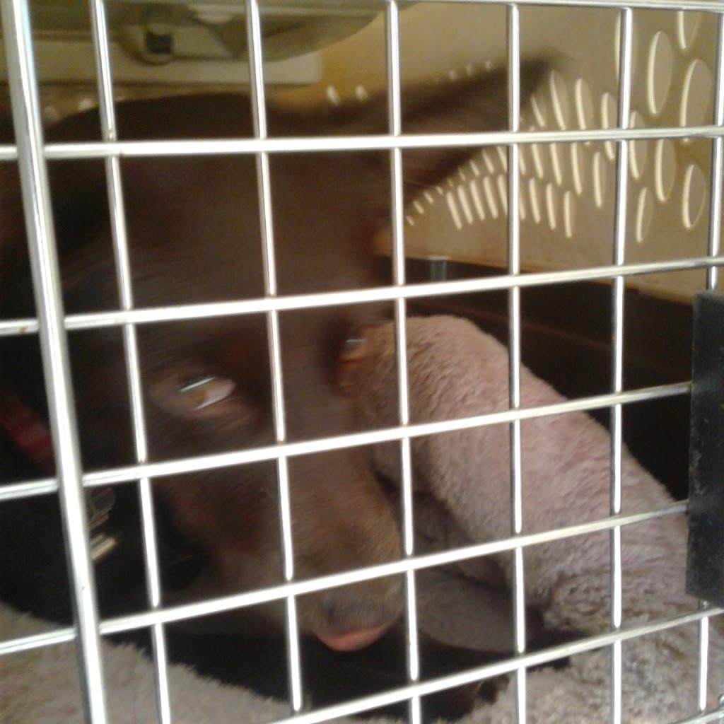 Golden State Humane Society - veterinary care  | Photo 2 of 10 | Address: 555 E Artesia Blvd, Long Beach, CA 90805, USA | Phone: (562) 423-8406