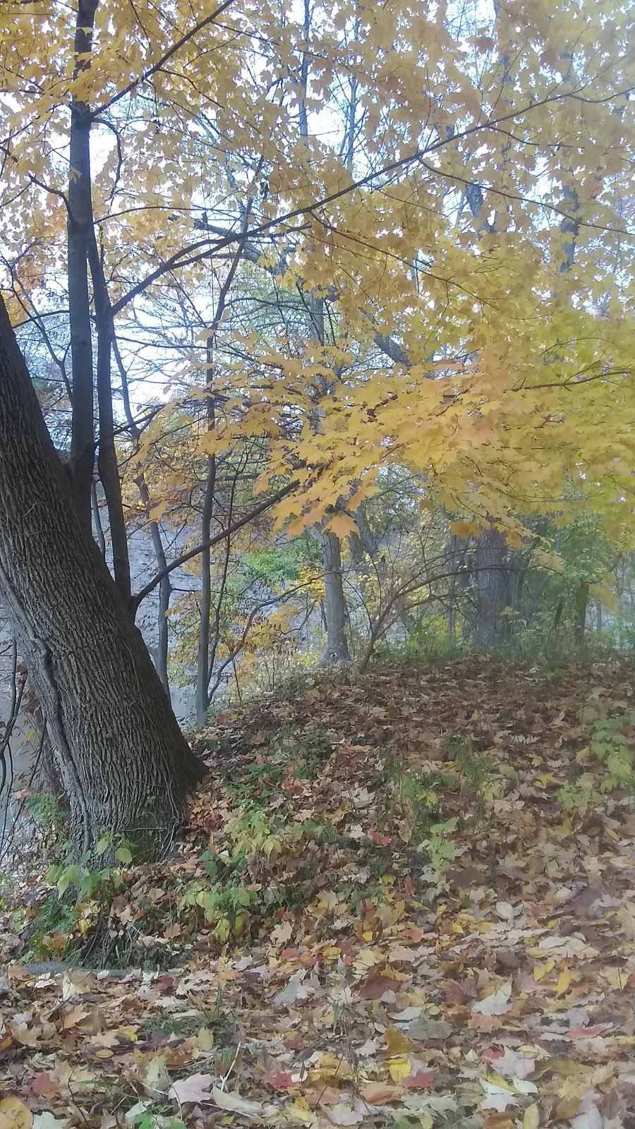Metro Parks - park  | Photo 9 of 10 | Address: Scenic Park Loop Trail, Lakewood, OH 44107, USA | Phone: (216) 635-3200