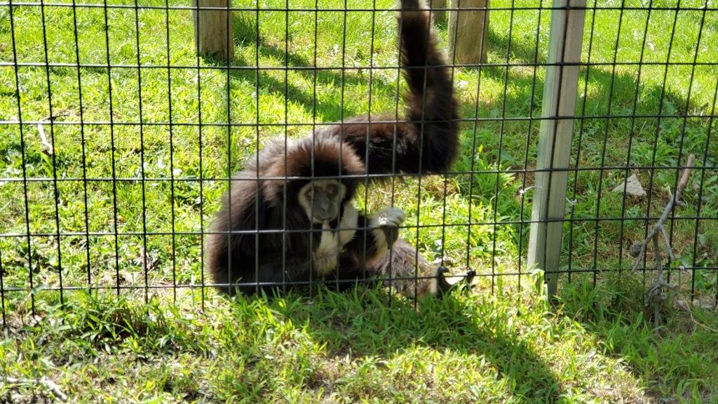 Safari Niagara - zoo    Photo 8 of 10   Address: 2821 Stevensville Rd, Stevensville, ON L0S 1S0, Canada   Phone: (905) 382-9669