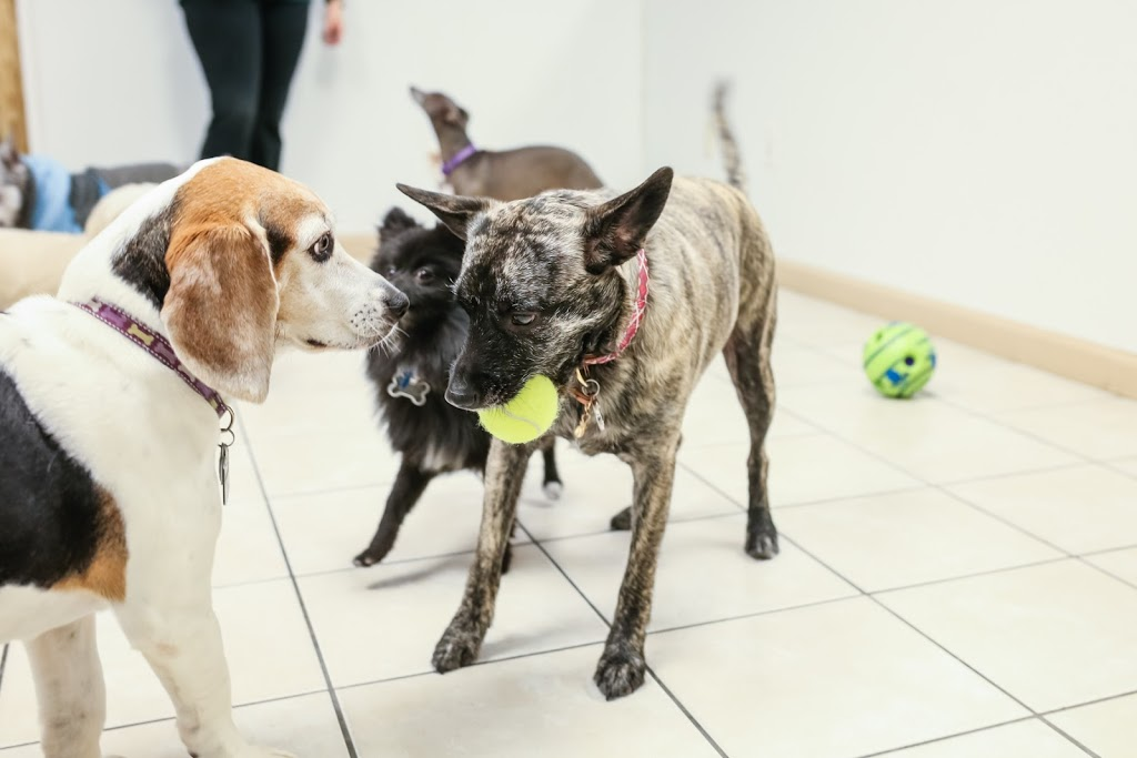 All Paws Inn Pet Resort and Daycare - pet store  | Photo 5 of 10 | Address: 1900 Lebanon Ave, Belleville, IL 62221, USA | Phone: (618) 233-7297