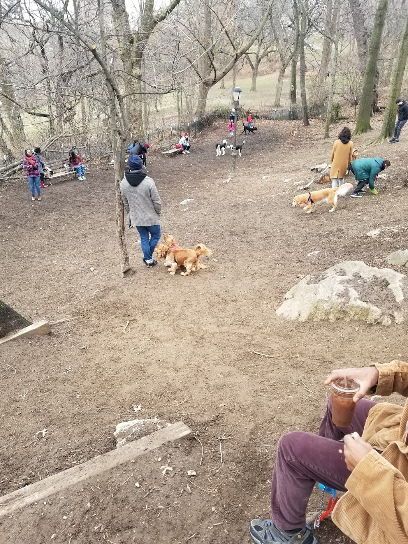 St. Nicholas Park Dog Run - park  | Photo 8 of 10 | Address: Unnamed Road, New York, NY 10032, USA | Phone: (212) 639-9675