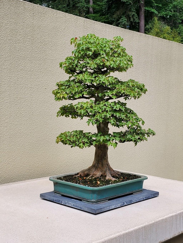 Pacific Bonsai Museum - museum    Photo 6 of 10   Address: 2515 S 336th St, Federal Way, WA 98003, USA   Phone: (253) 353-7345