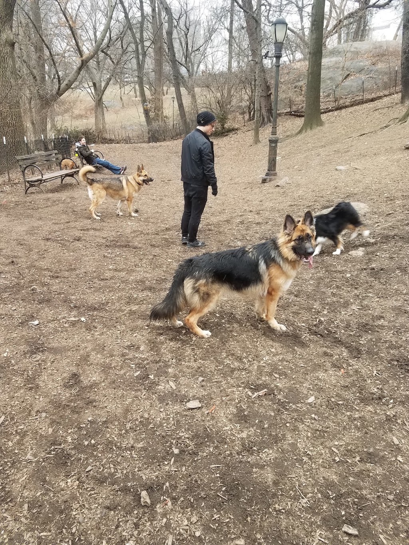 St. Nicholas Park Dog Run - park  | Photo 3 of 10 | Address: Unnamed Road, New York, NY 10032, USA | Phone: (212) 639-9675