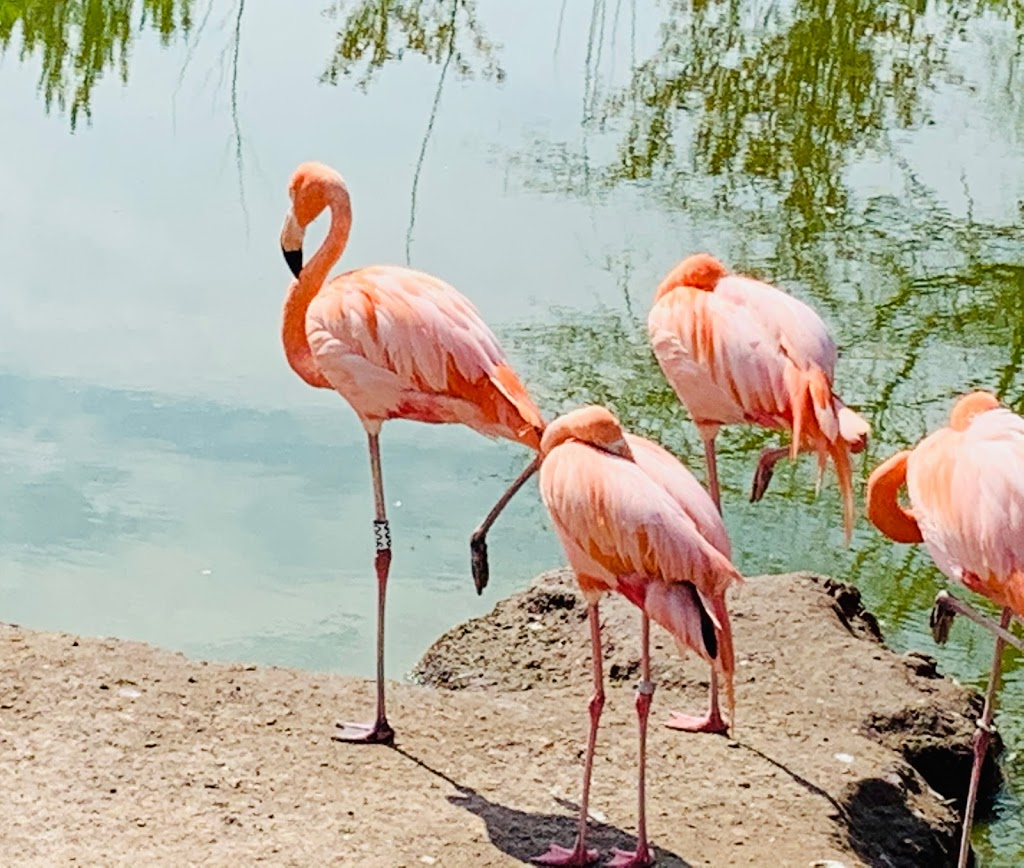Safari Niagara - zoo    Photo 6 of 10   Address: 2821 Stevensville Rd, Stevensville, ON L0S 1S0, Canada   Phone: (905) 382-9669