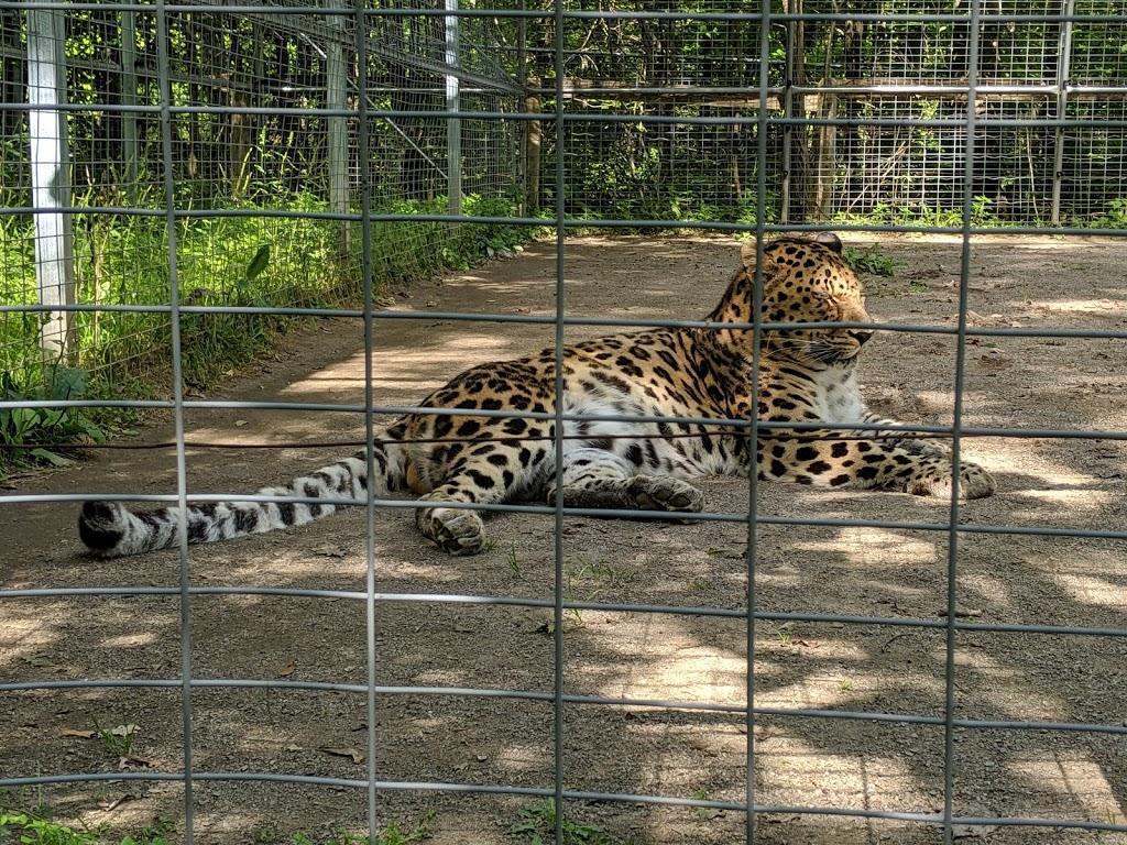 Safari Niagara - zoo    Photo 5 of 10   Address: 2821 Stevensville Rd, Stevensville, ON L0S 1S0, Canada   Phone: (905) 382-9669