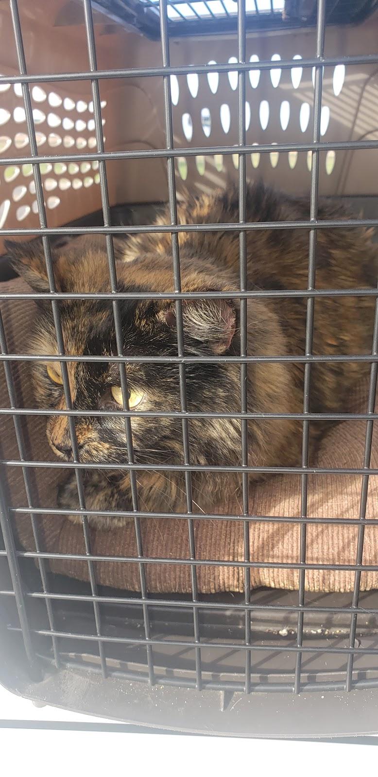 Pamoist Pet Hospital - veterinary care    Photo 2 of 3   Address: 5591 W Shaw Ave, Fresno, CA 93722, USA   Phone: (559) 271-2400