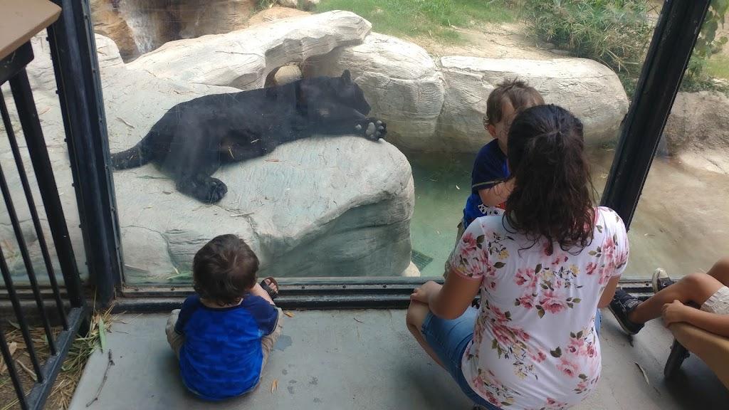 Reid Park Zoological Society - zoo    Photo 8 of 10   Address: 1030 S Randolph Way, Tucson, AZ 85716, USA   Phone: (520) 791-3204