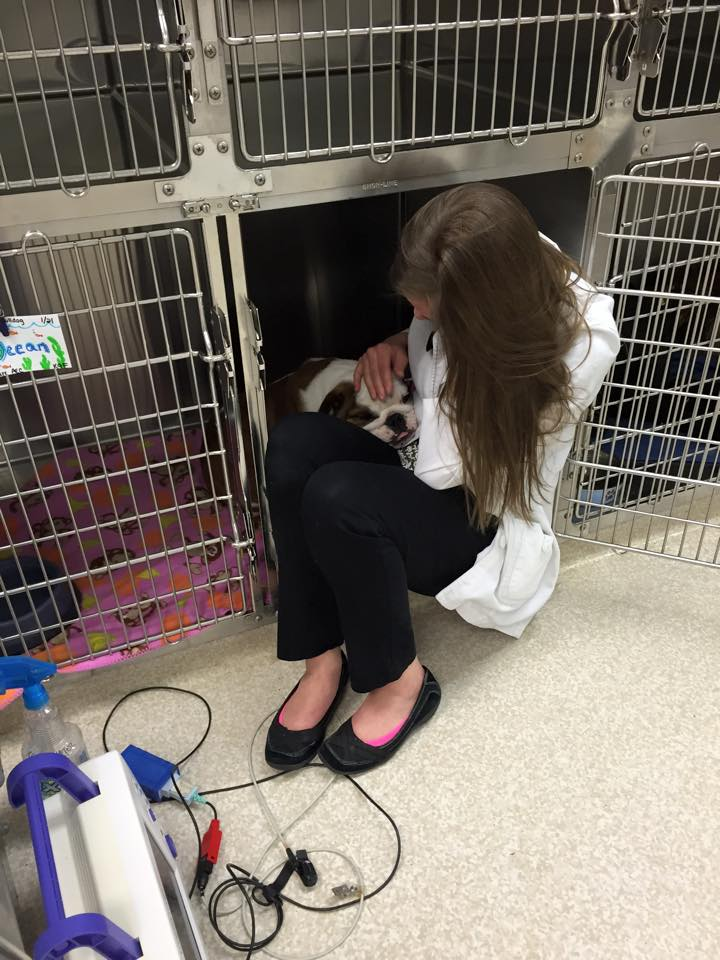 Kiln Creek Animal Care - veterinary care  | Photo 9 of 10 | Address: 900 Brick Kiln Blvd, Newport News, VA 23602, USA | Phone: (757) 886-1300