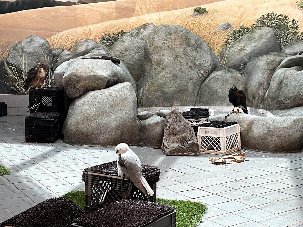 Lindsay Wildlife Experience - museum    Photo 7 of 10   Address: 1931 1st Ave, Walnut Creek, CA 94597, USA   Phone: (925) 935-1978