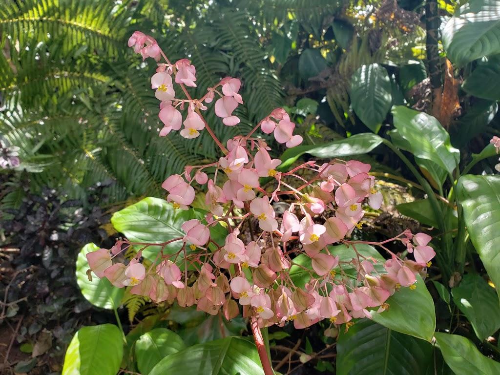 Wahiawā Botanical Garden - park  | Photo 10 of 10 | Address: 1396 California Ave, Wahiawa, HI 96786, USA | Phone: (808) 621-7321