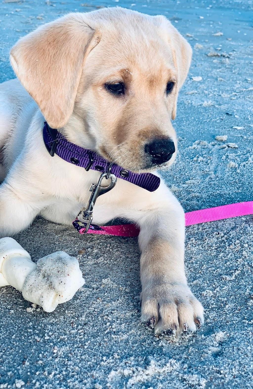 Pet Doctors of America - veterinary care    Photo 1 of 10   Address: 14471 Beach Blvd, Jacksonville, FL 32250, USA   Phone: (904) 223-5700