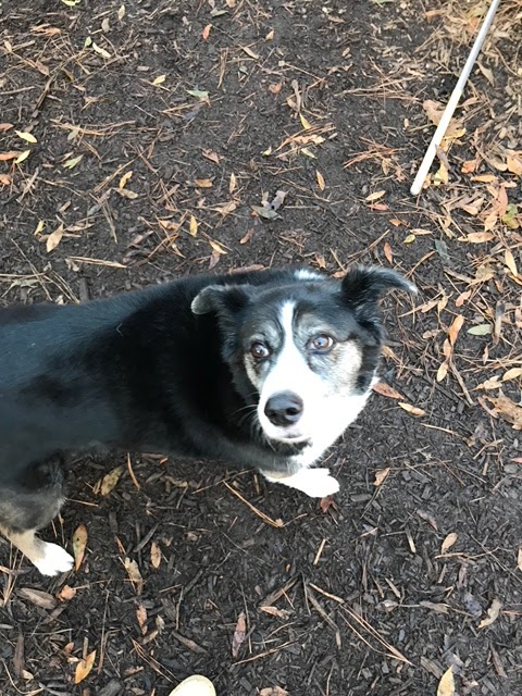 Kiln Creek Animal Care - veterinary care  | Photo 10 of 10 | Address: 900 Brick Kiln Blvd, Newport News, VA 23602, USA | Phone: (757) 886-1300