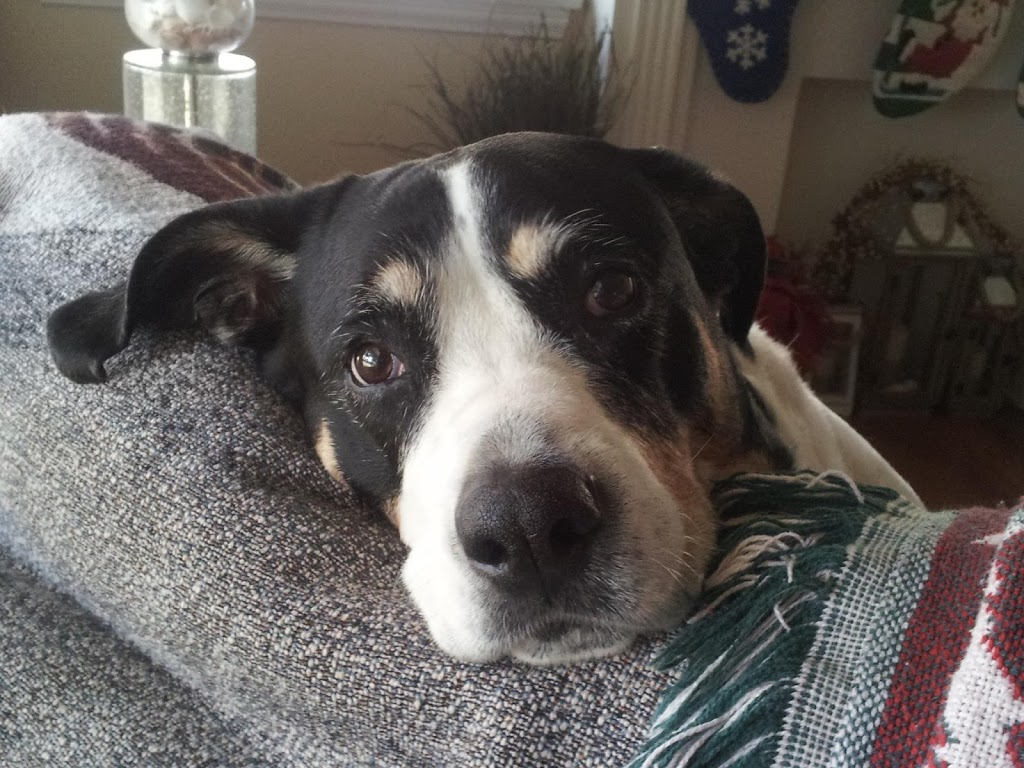 Golden State Humane Society - veterinary care  | Photo 7 of 10 | Address: 555 E Artesia Blvd, Long Beach, CA 90805, USA | Phone: (562) 423-8406