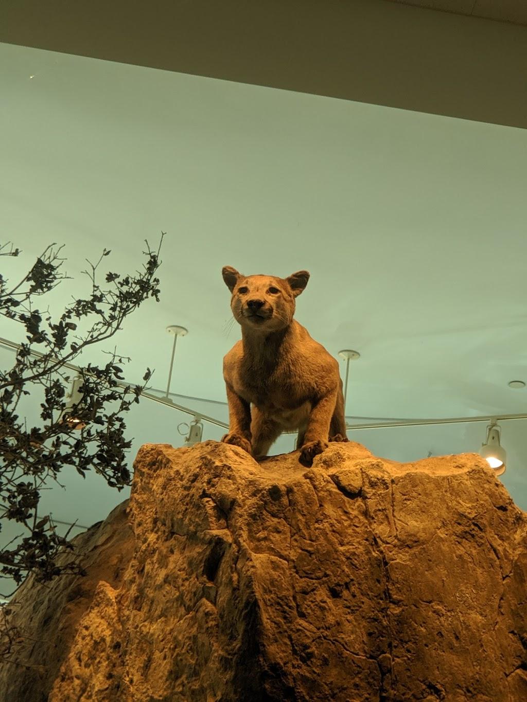 Lindsay Wildlife Experience - museum    Photo 8 of 10   Address: 1931 1st Ave, Walnut Creek, CA 94597, USA   Phone: (925) 935-1978