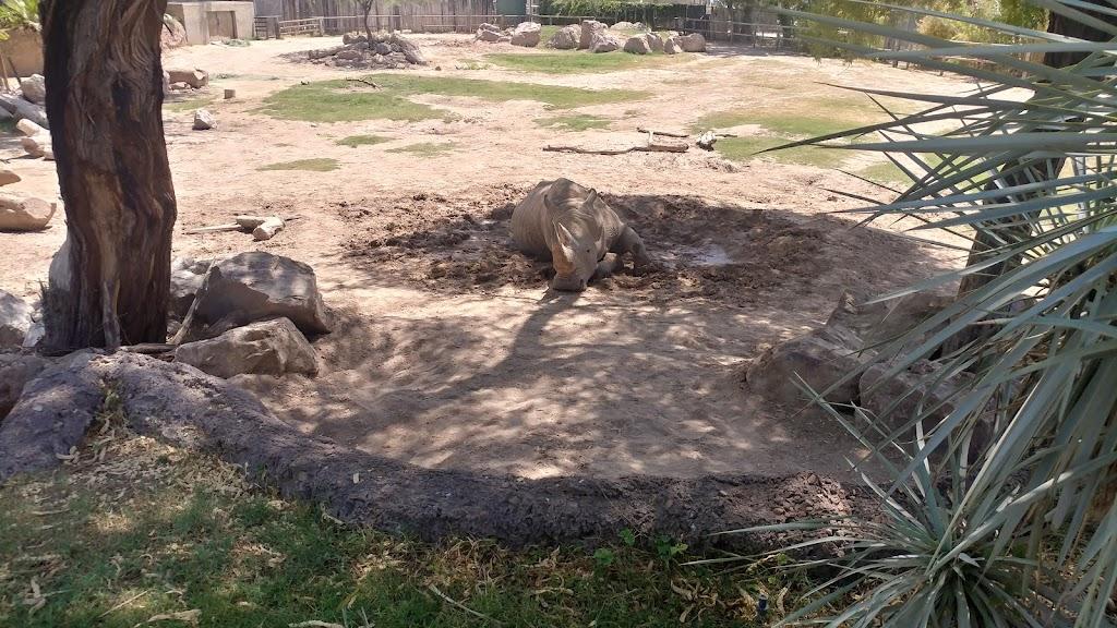 Reid Park Zoological Society - zoo    Photo 3 of 10   Address: 1030 S Randolph Way, Tucson, AZ 85716, USA   Phone: (520) 791-3204