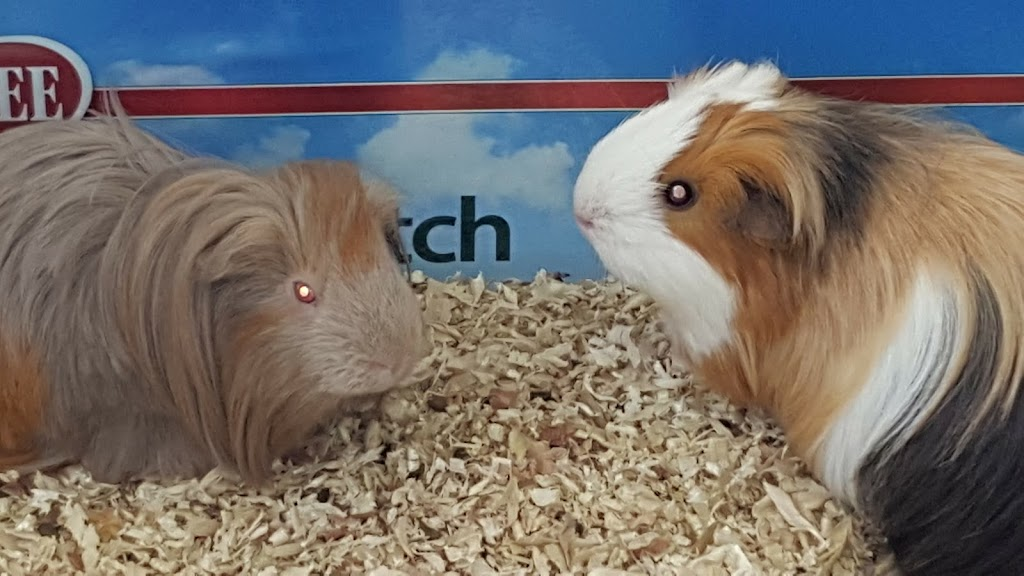 Pet Supplies Plus Town n Country - pet store  | Photo 6 of 10 | Address: 10055 W Hillsborough Ave, Tampa, FL 33615, USA | Phone: (813) 882-4494